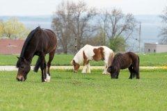 PonysK.jpg